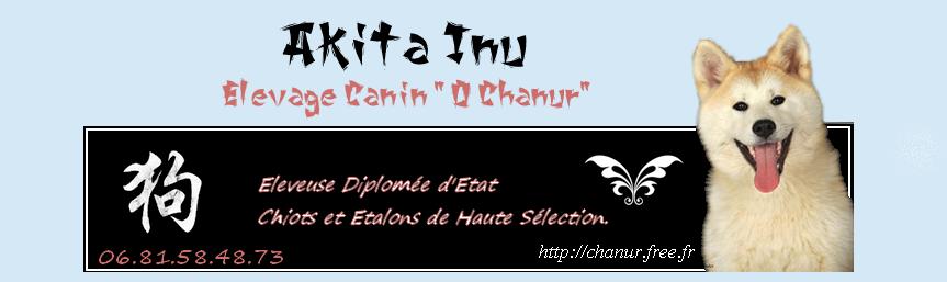 Forum Akita Inu Chiens Japonais / Japanese dogs / Nihon Ken Chanur Elevage
